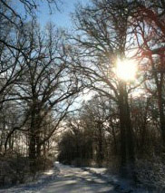 Light in Woods, taken at the IHM Motherhouse by Sister Maxine Kollasch