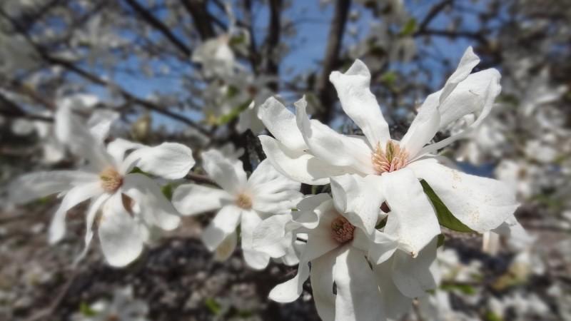 Nunday Blog   Happy Earth Day!
