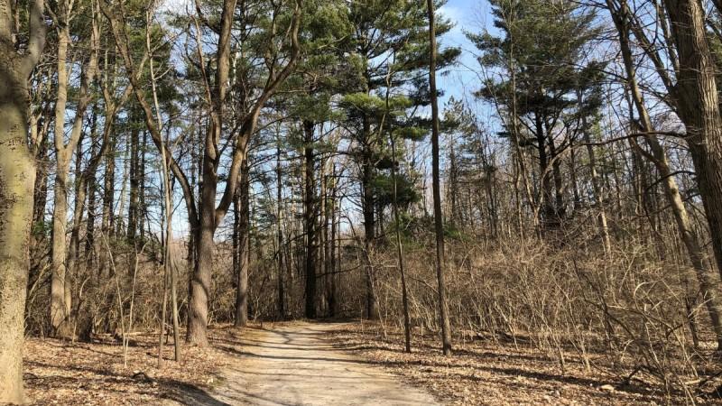 Nun Talk Blog   Saintly walkers on the journey of Lent